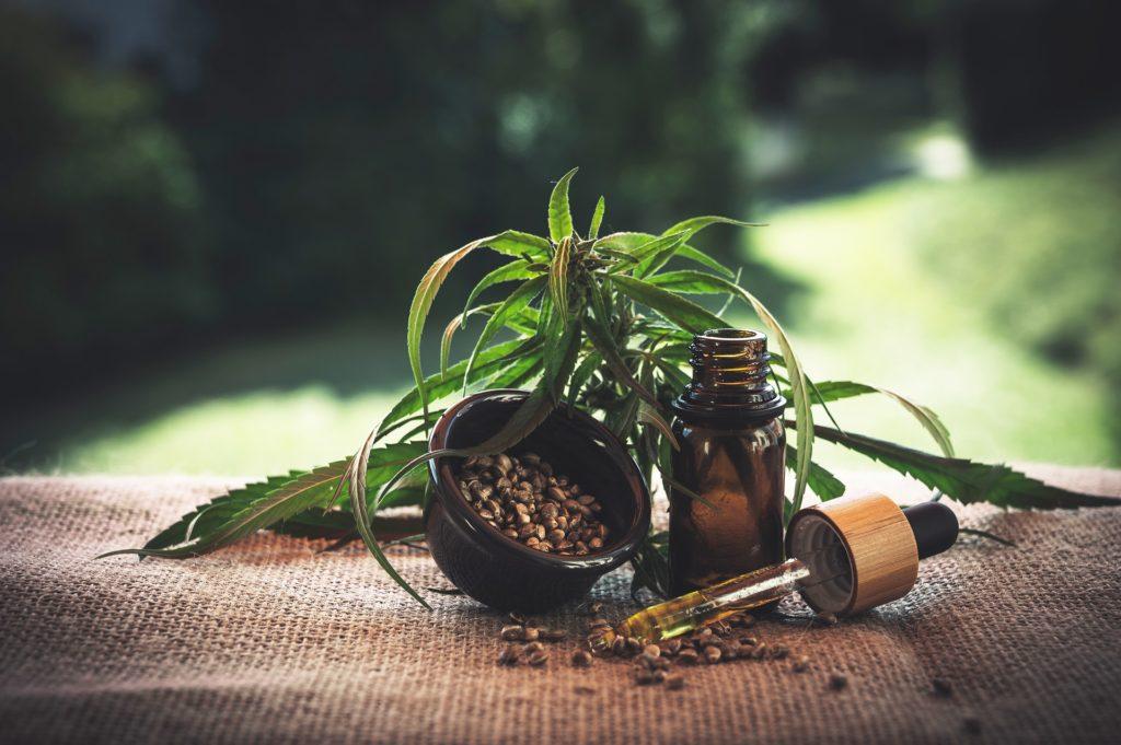 De CBD uit de cannabisplant wordt na extractie opgelost in een natuurlijke olie: CBD olie.